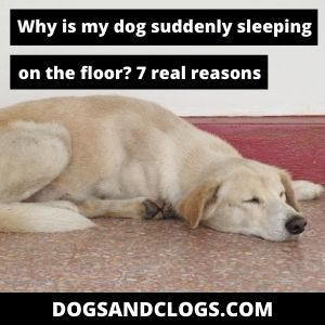 Why Is My Dog Suddenly Sleeping On The Floor