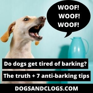 Do Dogs Get Tired Of Barking