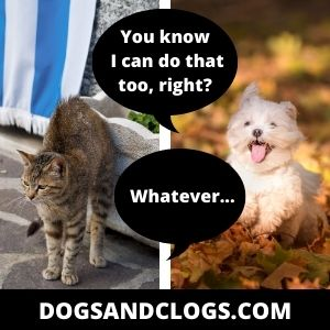 Dog Arches Back Like A Cat Meme