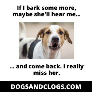 Dog Barking Missing Owner