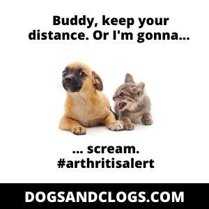 Dog Screams Due To Arthritis