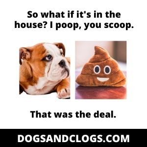 Dog Suddenly Pooping In The House
