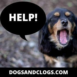 Help Screaming Dog
