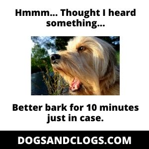How Long Can A Dog Bark