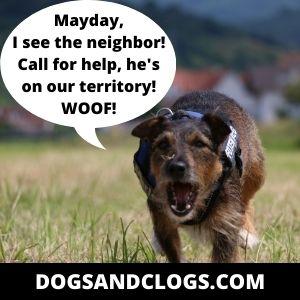 Stop Dog Barking At Neighbors