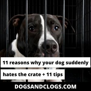 Why Does My Dog Suddenly Hate His Crate