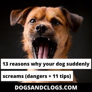 Why Does My Dog Suddenly Scream?
