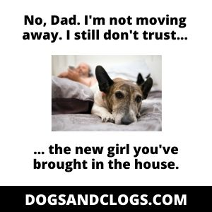 Clingy Dog Dealing With Change Meme