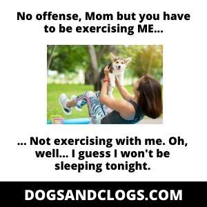 Exercise Your Dog Meme