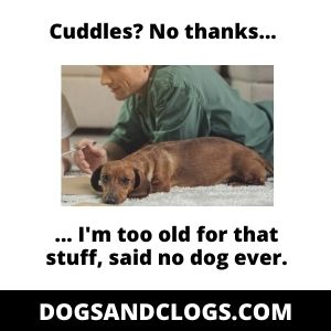 Old Dog Doesn't Want To Cuddle