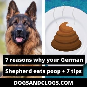 Why Does My German Shepherd Eat Poop