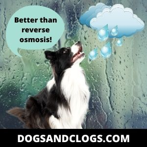 Dogs Find Rainwater Smell Intriguing