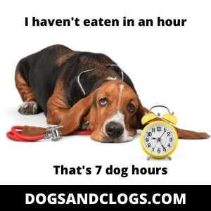 Feed Your Dog At The Proper Time