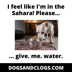 Let Your Dog Drink More Water In The Winter