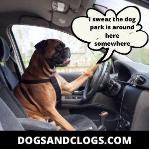 Let Your Dog Socialize