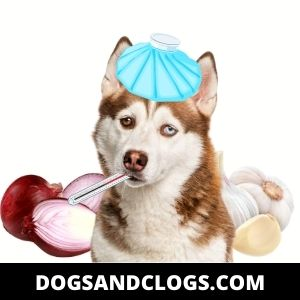 Onion And Garlic Are Toxic For Your Husky