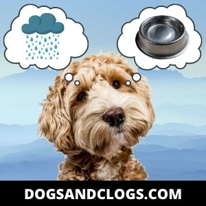 Pure Rainwater May Not Always Be A Safe Drink For Dogs