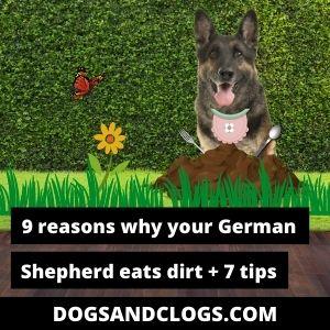 Why Does My German Shepherd Eat Dirt