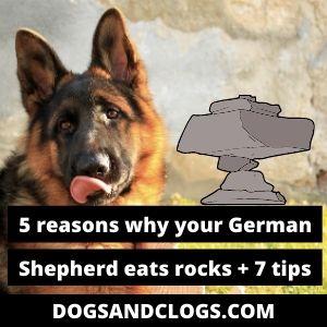 Why Does My German Shepherd Eat Rocks