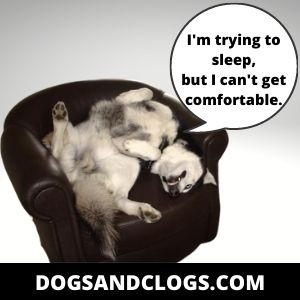 Your Husky Won't Sleep At Night Because Of Their Environment
