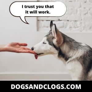 Be Patient In Getting Your Dog's Trust