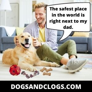 Dog Attached To You Because He Sees You As His Parent