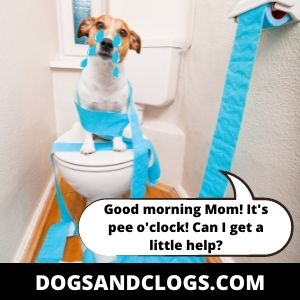 Dog Cries In The Morning Due To Peeing Problems