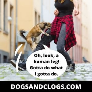 Dog Humping Human Leg
