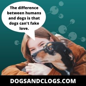Dogs Are Not Sexually Attracted To Humans Because They Are Built Differently