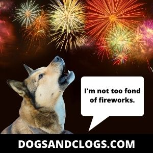 Fireworks Are Threats To Your Dog