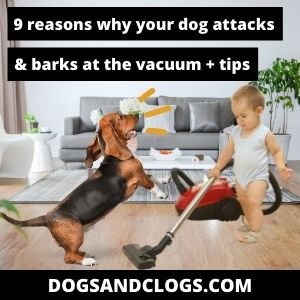 Why Does My Dog Attack The Vacuum