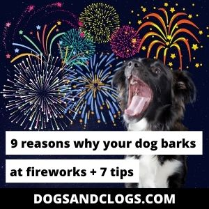 Why Does My Dog Bark At Fireworks