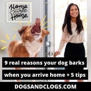 Why Does My Dog Bark When I Arrive Home