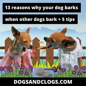 Why Does My Dog Bark When Other Dogs Bark