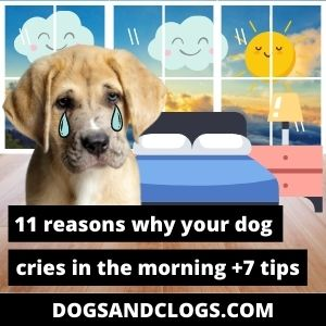 Why Does My Dog Cry In The Morning