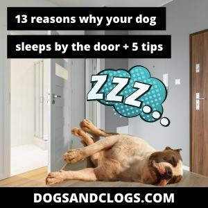 Why Does My Dog Sleep By The Door