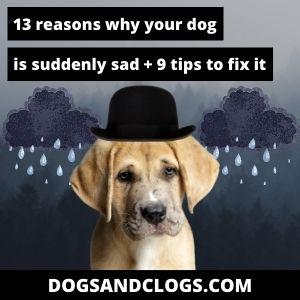 Why Is My Dog Sad Suddenly
