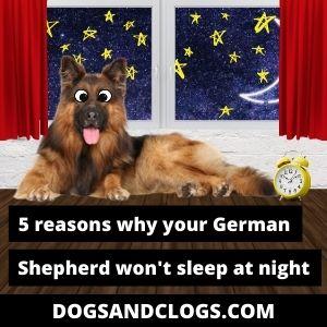 Why Won't My German Shepherd Sleep At Night