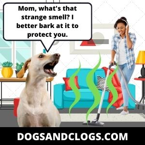 Your Dog Barks At The Vacuum And Attacks It Due To Its Smell