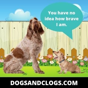 Your Dog Barks At Certain Dogs Due To A Small Dog Syndrome