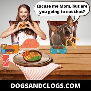 Your Dog Barks To Ask For Some Food