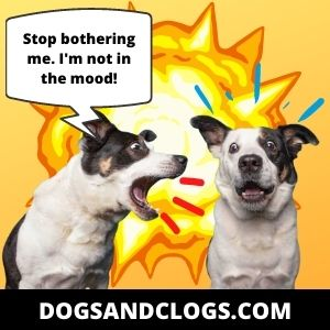 Your Dog Barks When Other Dogs Bark If He's Not In The Mood