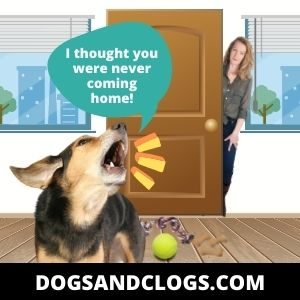Your Dog Barks When You Arrive Home Due To Separation Anxiety