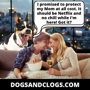 Your Dog Barks When You Kiss To Stop A Conflict