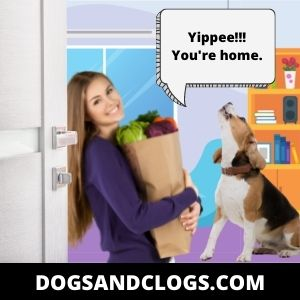 Your Dog Howls When You Get Home As A Way To Greet You