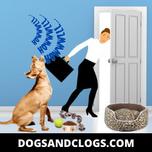 Your Dog Howls When You Leave Due To Medical Reasons