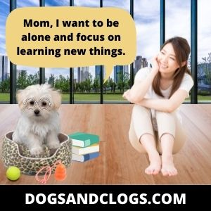 Your Dog Is Aloof In His Early Stage