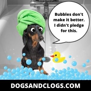 Your Dog Is Hyper Because You Gave Them A Morning Bath