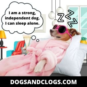 Your Dog Is Independent In Nature