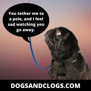 Your Dog Is Now Tethered